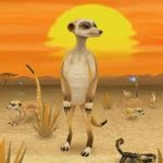 Lead the Meerkats